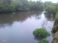 Rzeka Radomka poni¿ej mostu w Jastrzêbi