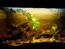 Zak³adanie akwarium - Kiedy pasja wchodzi na wy¿szy poziom..