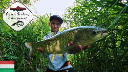 HD Czech Fishing: Grass Carp with Common Reed (³owienie amur z trzcin±)