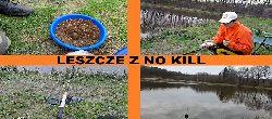 Kwietniowe leszcze z no-kill / PZW Rogów