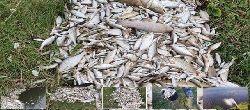 Setki ¶niêtych ryb w zbiorniku w Be³chowie.