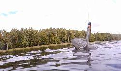 Dlaczego w polskich rzekach i jeziorach nie ma ryb?