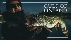 Wild Fish Stories - Gulf of FInland