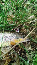 Rzeki na metry-marzenie pstr±garzy.