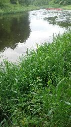 Temat rzeka czyli kajaki na wodach