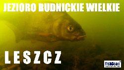 Jezioro Rudnickie Wielkie (Grudzi±dz) - Du¿e leszcze