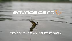 Savage Gear Herring Shad 4D - filmowy test przynêty Savage