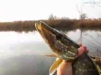Miko³ajkowy wypad na ryby