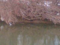 Rzeka nizinna w ¦wierzowej Polskiej