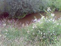 Czarna Woda - rzeka  - zdjêcia, foto galerie, fotki, zdjêcie