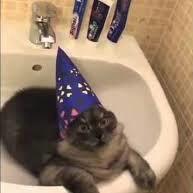 czarodziejski kot
